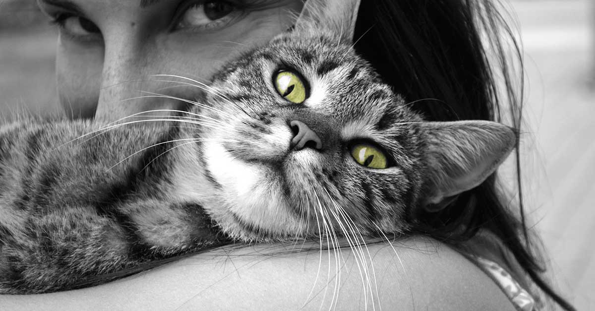 Home remedies for uti for animals, cats
